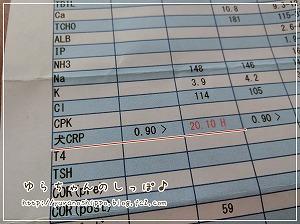 フィラリア検査と炎症の検査