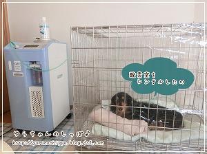 ペット用酸素室をレンタル