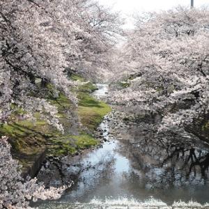 桜吹雪の残堀川へ