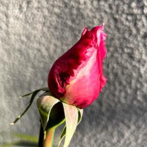 反省/薔薇/小さなしあわせ