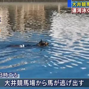 「馬が運河を泳いでいる!」 大井競馬場から逃げ出した競走馬、運河を泳ぐ~ネットの反応「今日は暑いから泳ぎたかったんだね」「自主トレ」