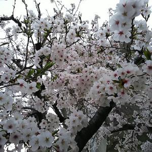 春なのに・・・ため息