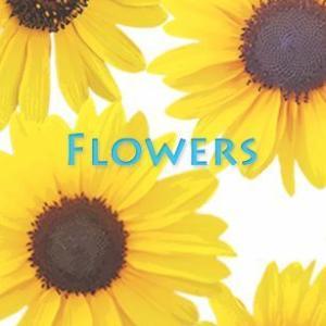 Flowers-15(ひまわり)