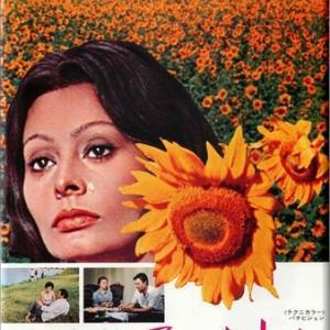 ひまわり (1970)