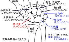 日本ハムファイターズ 清宮選手が有鉤骨骨折