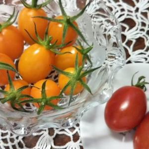 初めての家庭菜園その4~驚きいっぱい!ミニトマト「アイコ」の栽培