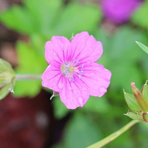 ジミだけど可愛い花達・・・タデ原湿原