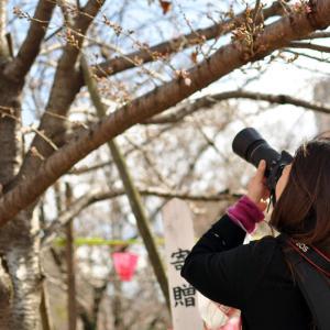 【 お花見 】#54|近所の桜|たんちっちのどこへでも行ってみよう!!( 大阪- 土佐稲荷神社)