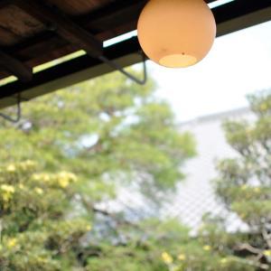 【 お花見 】#55|歴史ある桜|たんちっちのどこへでも行ってみよう!!( 京都 妙心寺 -退蔵院-)