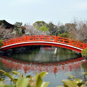 【 お花見 】#57|歴史ある桜|たんちっちのどこへでも行ってみよう!!( 京都 -二条城 世界遺産-)