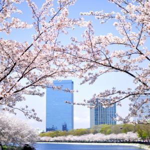 【 お花見 】#58|歴史ある桜|たんちっちのどこへでも行ってみよう!!( 大阪 -大阪城-)