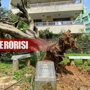 那覇都市景観資源「安里公園のガジュマル」が台風で倒木。