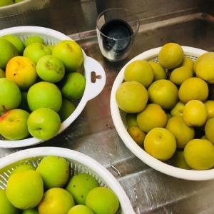 お買い物と梅作業