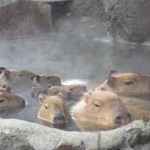 【2019年最新】伊豆シャボテン動物公園割引14選!入園料300円引きクーポン