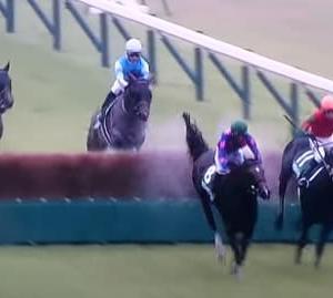 2021東京ジャンプステークス【レース別相性チェック】