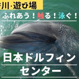 イルカとふれあう、触る、泳ぐ 日本ドルフィンセンターへ行ってみた