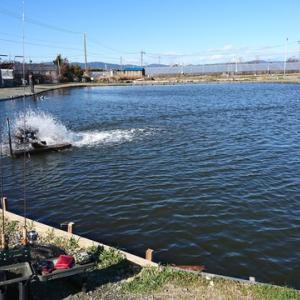 2020/2/27 浜名湖FRエリアフィッシング1