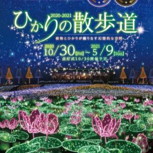 東南植物楽園イルミネーション2020