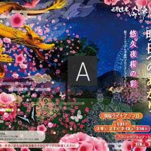 今帰仁桜ライトアップ2021