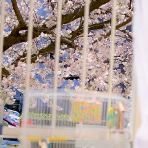 春です、今年会った鳥ちゃんたちです