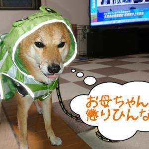 台風の日も散歩