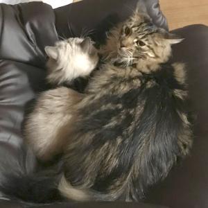 子猫を抱きしめる母猫?いえいえ