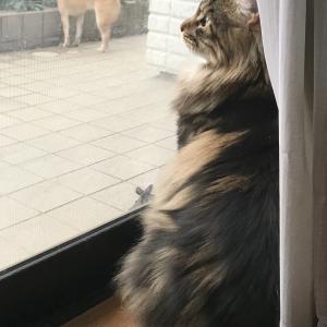お庭散歩の犬 & 眺める猫