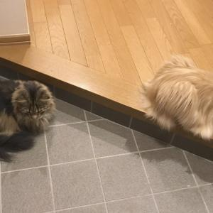 兄弟猫といえばシンクロ