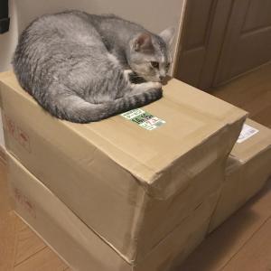 猫砂まとめ買い