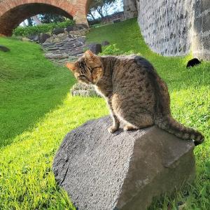 やっとサン・ジョルジェ城で出会えた、可愛いポルトガルの猫ちゃん-ポルトガル旅行記60