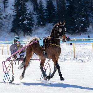 日本にはない馬の競技トロットレースが興味深い