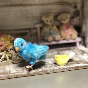 青い小鳥さん(*^^*)