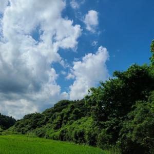 毎朝、畔の草刈りに奮闘中!まだまだ終わりませーん! 米屋ふくち店長の米づくり
