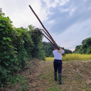 田んぼに杭を運びます 天日干し稲刈り準備その4 米屋ふくち店長の米づくり
