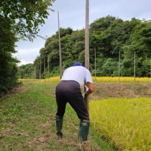 天日乾燥用の杭を突きます 天日干し稲刈り準備その5 米屋ふくち店長の米づくり 【動画あり】
