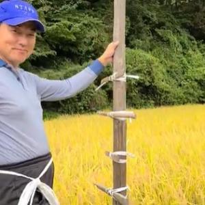 杭に横木を結びつけます 天日干し稲刈り準備その6 米屋ふくち店長の米づくり 【動画あり】
