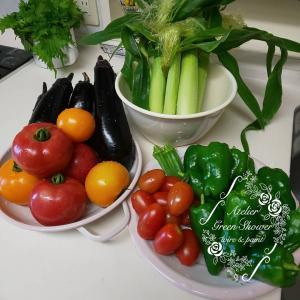 夏野菜の収穫始まりました