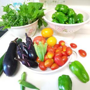 夏野菜の収穫もそろそろ終わります・・・と、梅干し