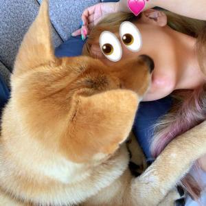 保護犬うにくん、歯がついに生えそろいました!!
