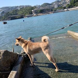 『岩場編』綺麗な海でインスタ映え!香港スタンレーで大自然と触れ合おう!