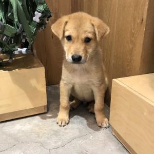 香港ホライズンプラザに捨て犬を貰いに行きました