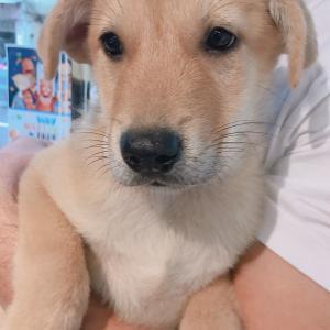 香港の捨て犬保護センターで犬をもらう決意を固めた日