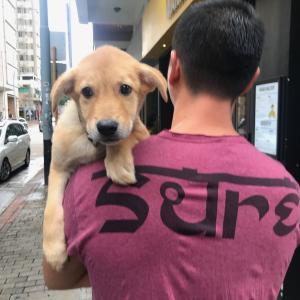 香港の保護犬うに君、初めての動物病院でガクブルスタイル