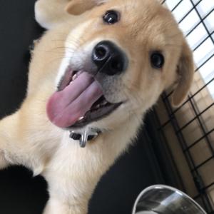香港捨て犬保護センターからついに我が家に子犬がきたぞ!!