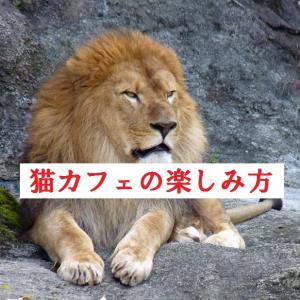 【保存版】猫カフェの楽しみ方を教える記事