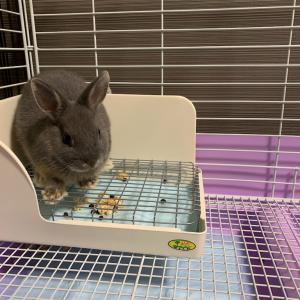 【ざつだん!】帰宅したら家にウサギがいる生活