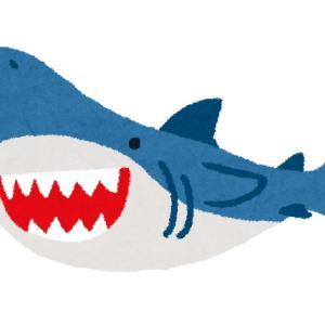 【ざつだん!】寂しさを紛らわすためにIKEAのサメのぬいぐるみを買ってみたよ!