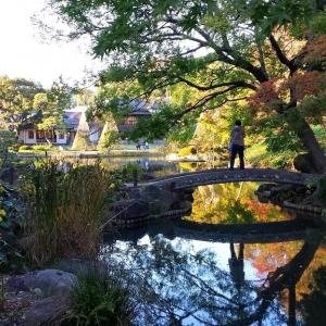 Higo Hosokawa Garden ~ Tokyo Great Garden in Autumn