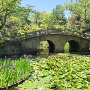菅原神社の眼鏡橋とカキツバタ、1年を通して1番美しい5月に行かなきゃ損!?