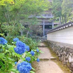 岡山寺社巡り 真庭市 普門寺に映える30種3000株のあじさいが2019年も見頃に